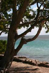 View from Plantation Key